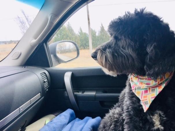 Abby copilot